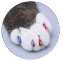 ソフトクロー ネコ用ネイルキャップ★爪とぎトラブルをオシャレに解決《コンプリートキット》